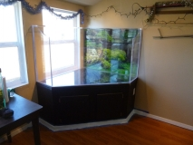 Turtle Tank Completion